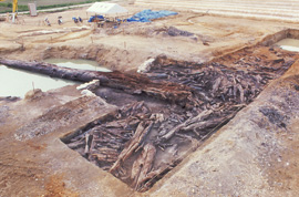 写真:9万年前の地表面下部の樹根